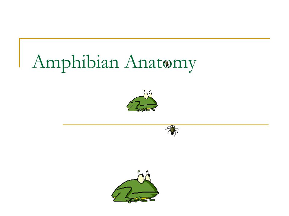 Amphibian Anatomy. - ppt video online download