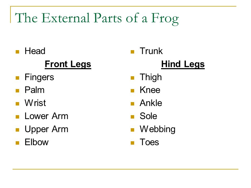 Unique Frog External Anatomy Worksheet Answers Collection - Human ...