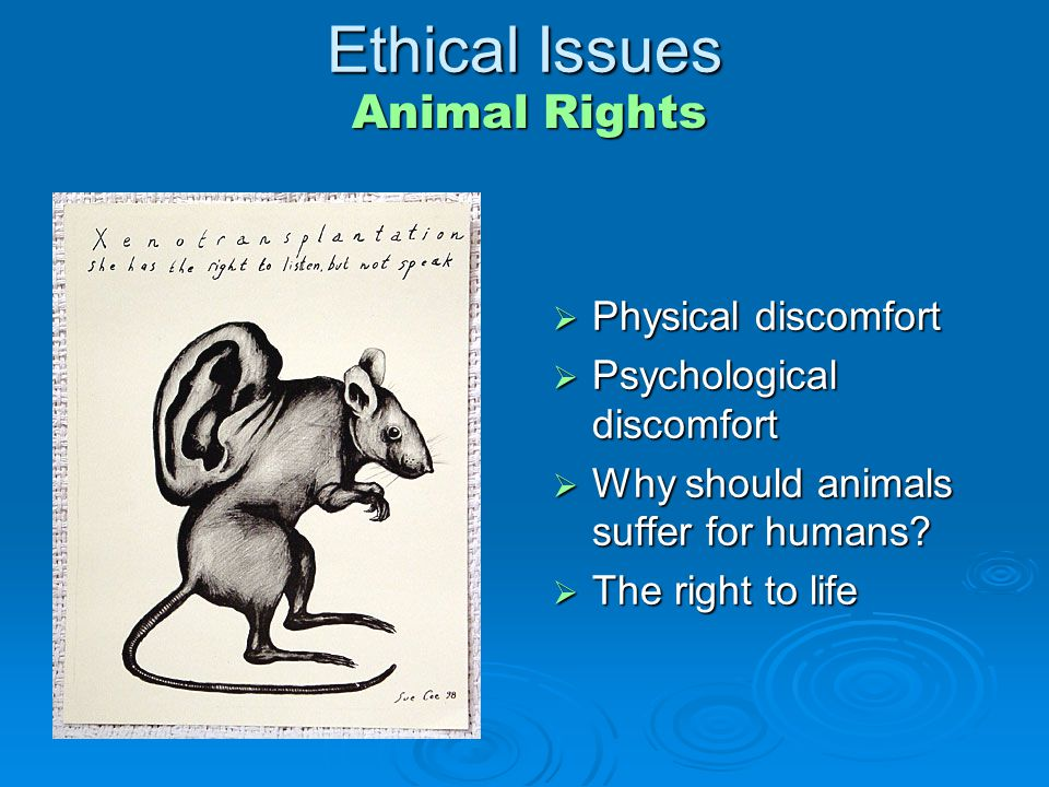 ethics animal rights essay Identifies deontological approaches to ethics, such as rights protection for animals in this essay advocate of rights [21] between the species iii august.