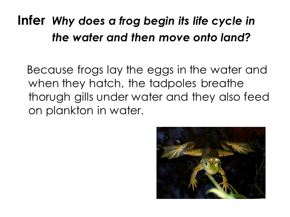 Infer Why does a frog begin its life cycle in