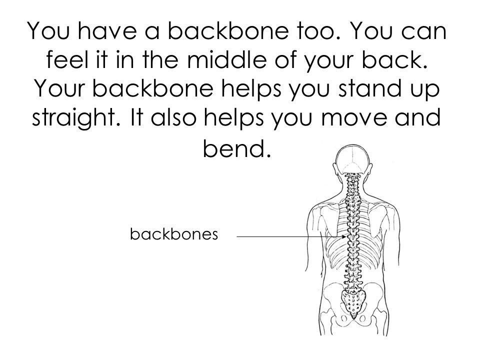 You have a backbone too. You can feel it in the middle of your back