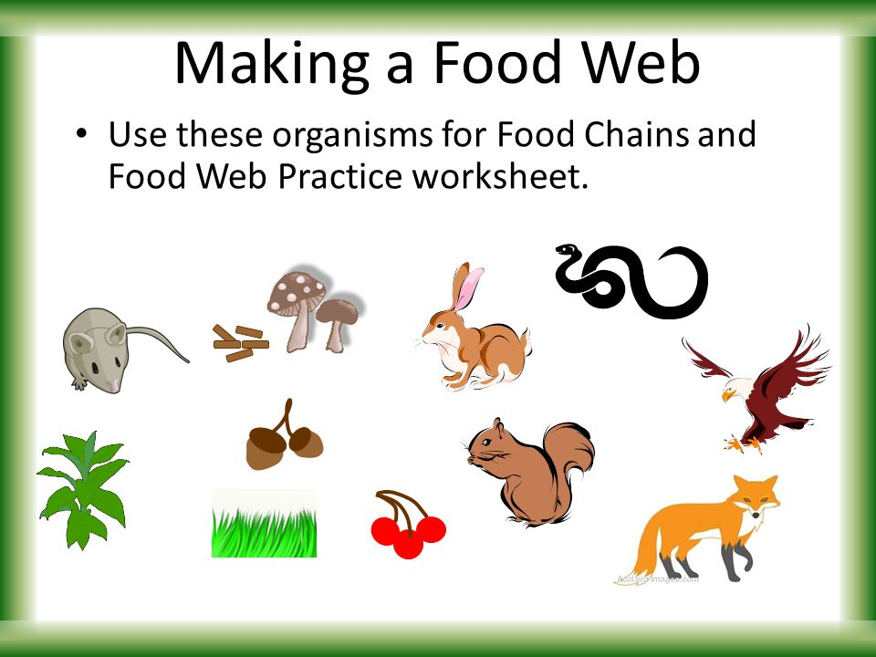 FOOD CHAINS WEBS Introduction to ENERGY FLOW ppt video online – Food Chains Worksheet