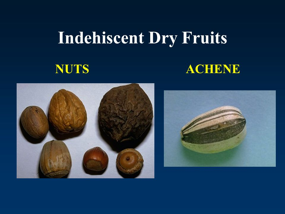 Indehiscent Dry Fruits