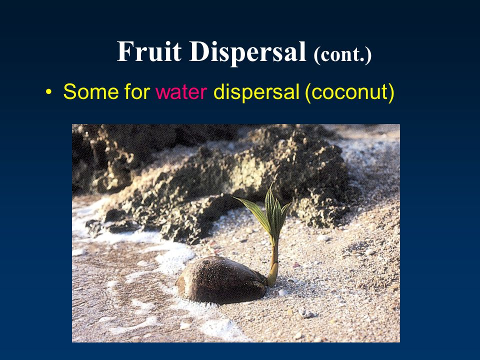 Fruit Dispersal (cont.)