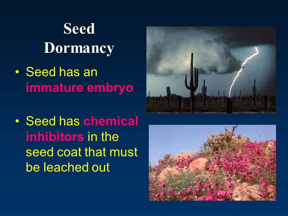 Seed Dormancy Seed has an immature embryo