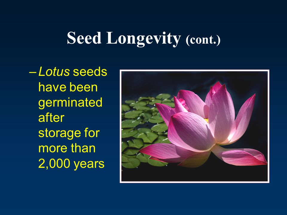 Seed Longevity (cont.) Lotus seeds have been germinated after storage for more than 2,000 years