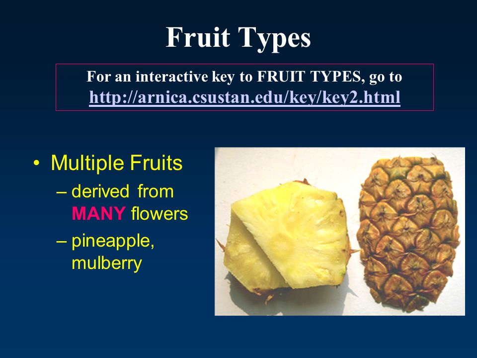 Fruit Types Multiple Fruits derived from MANY flowers