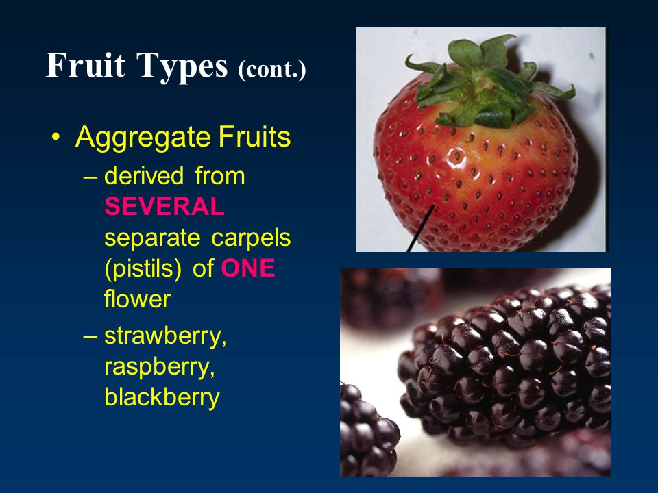 Fruit Types (cont.) Aggregate Fruits
