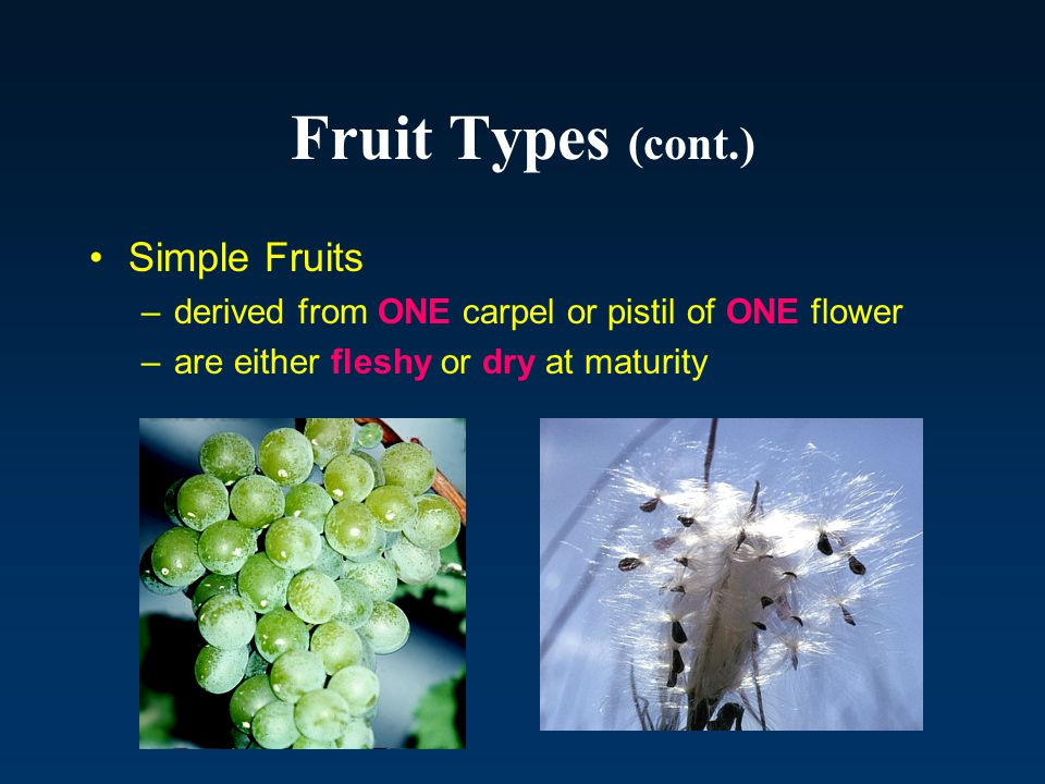 Fruit Types (cont.) Simple Fruits