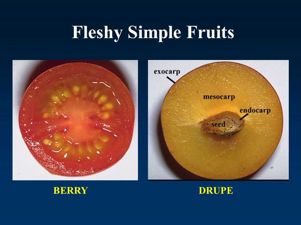 Fleshy Simple Fruits BERRY DRUPE