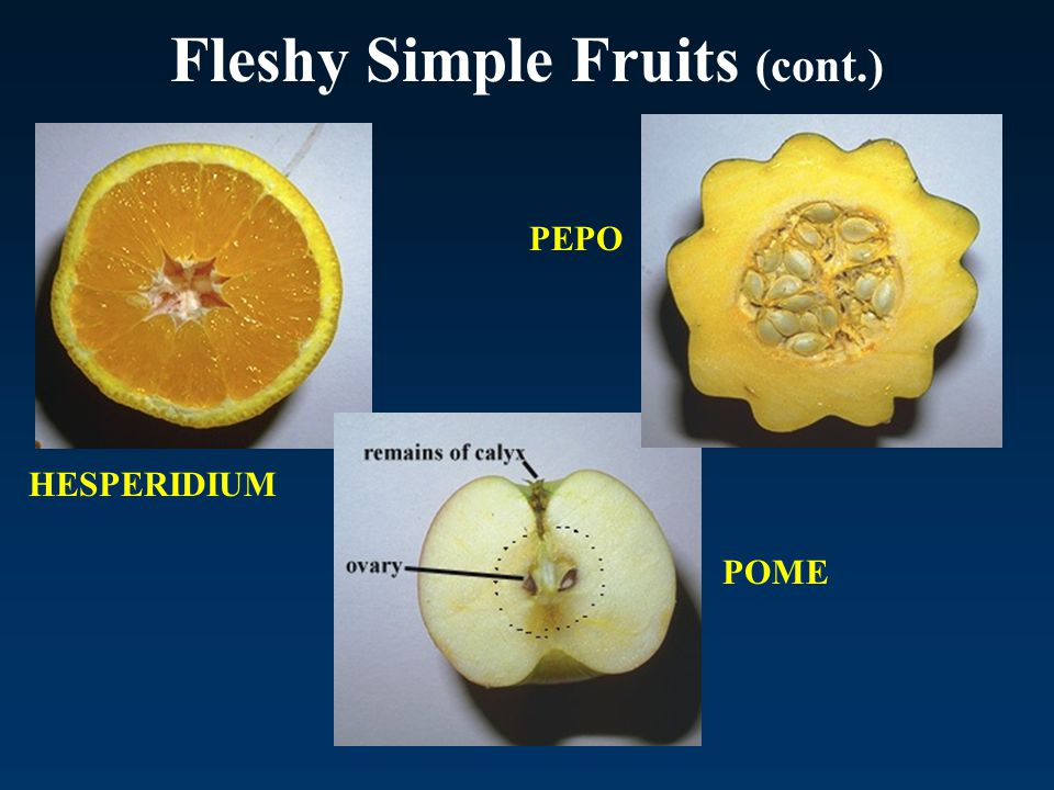 Fleshy Simple Fruits (cont.)