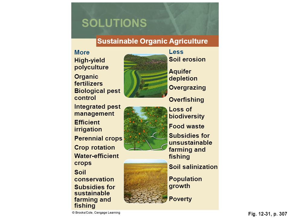 Food soil and pest management ppt download for Organic soil solutions