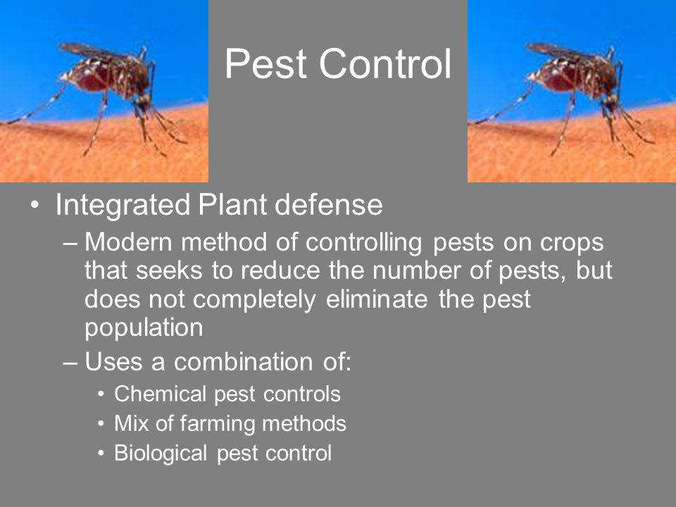methods of pest control for crop productivity There is a move to reduce the use of pesticides in favor of more environmentally friendly methods of pest control in this lesson, we'll explore.