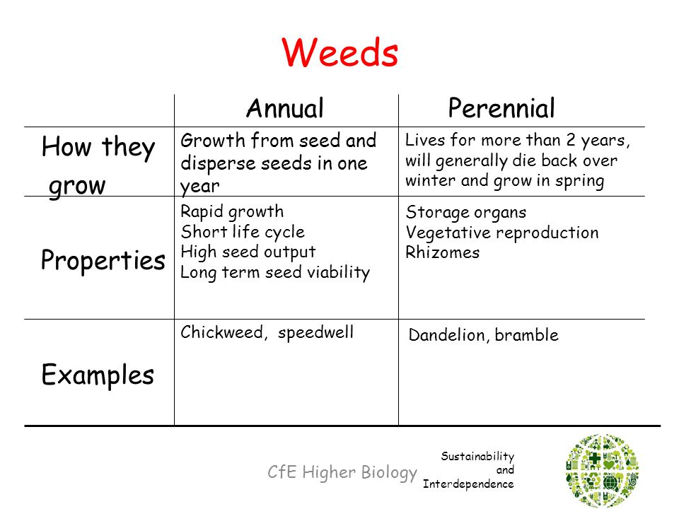 Weeds Annual Perennial How they grow Properties Examples