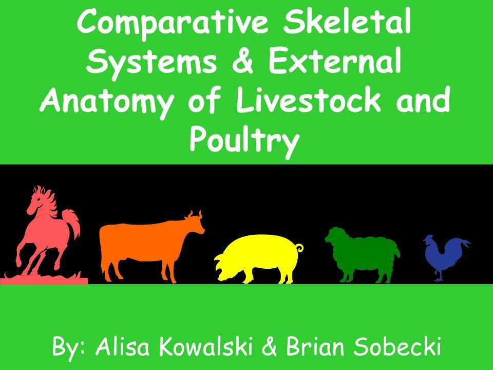 By: Alisa Kowalski & Brian Sobecki - ppt video online download