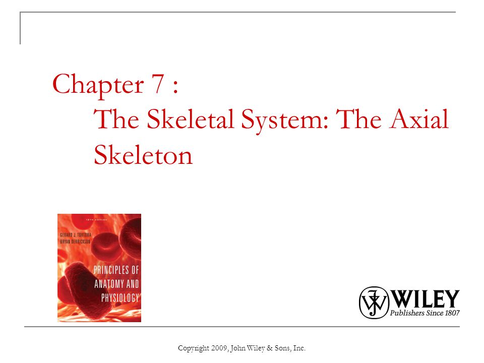 Chapter 7 The Skeletal System The Axial Skeleton