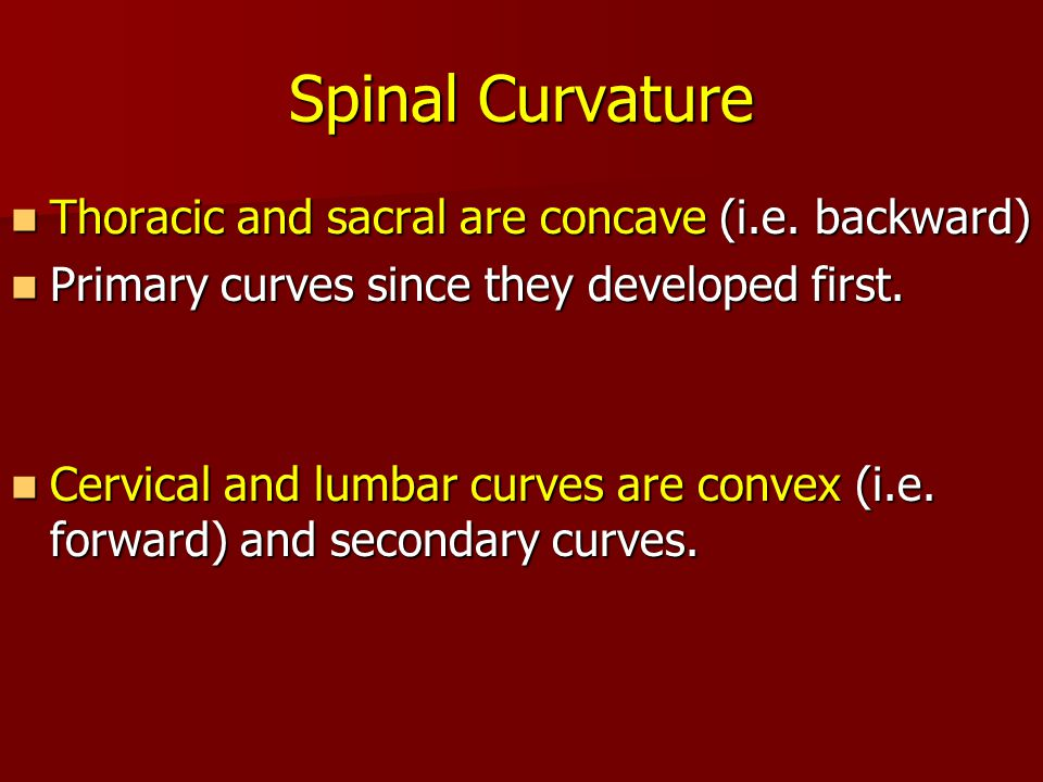 Spinal Curvature Thoracic and sacral are concave (i.e. backward)