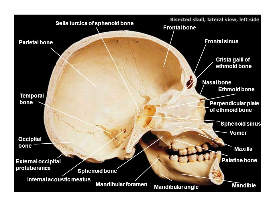 Sella turcica of sphenoid bone