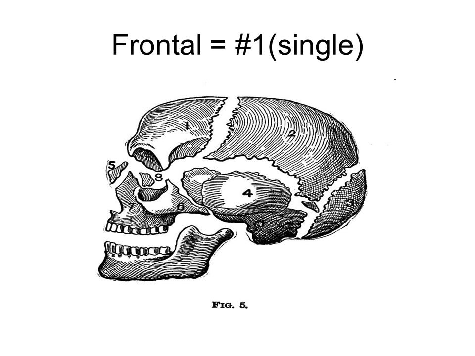 Frontal = #1(single)