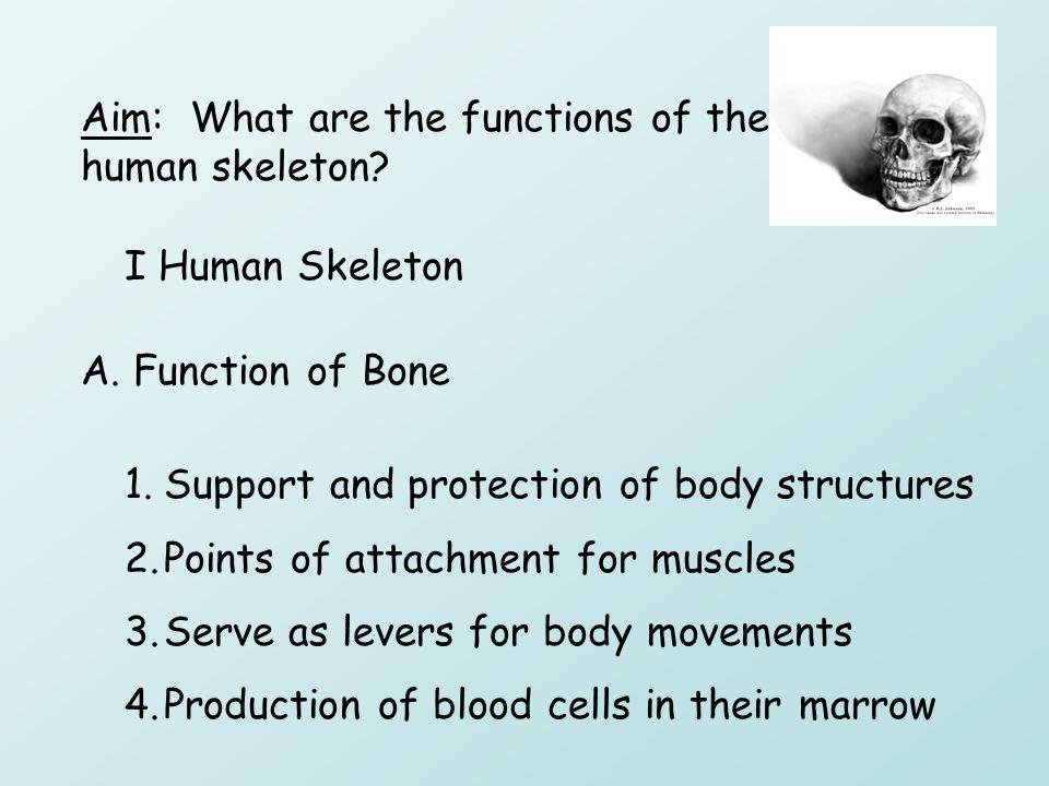 locomotion skeletal system. - ppt download, Skeleton