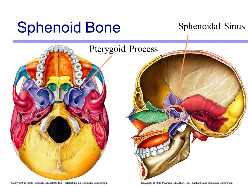 Sphenoid Bone Ppt – defenderauto.info