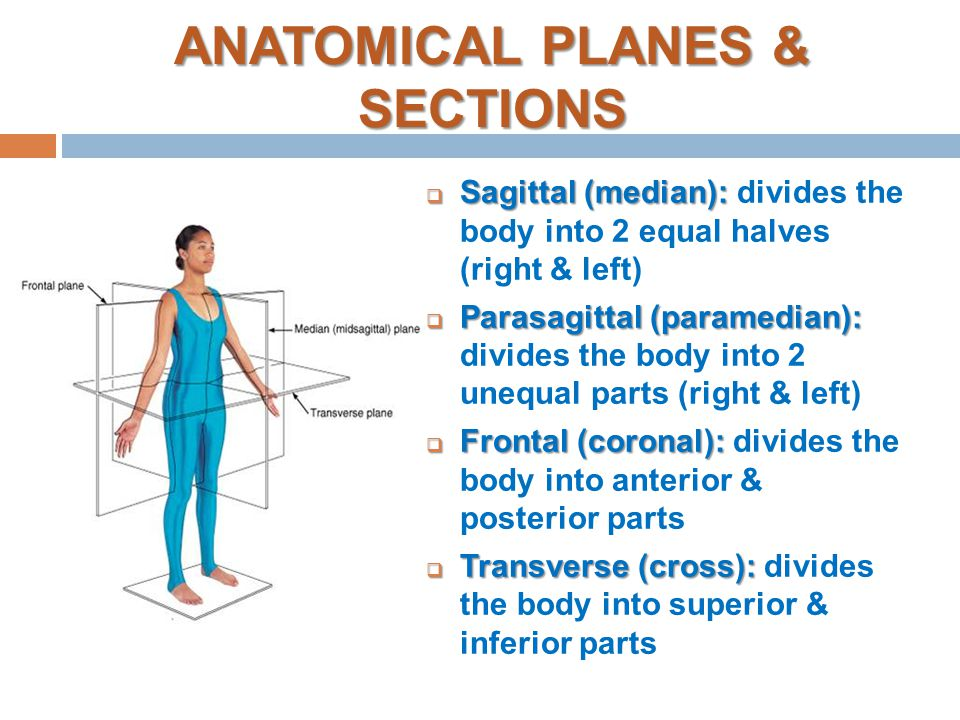 Anatomy body planes