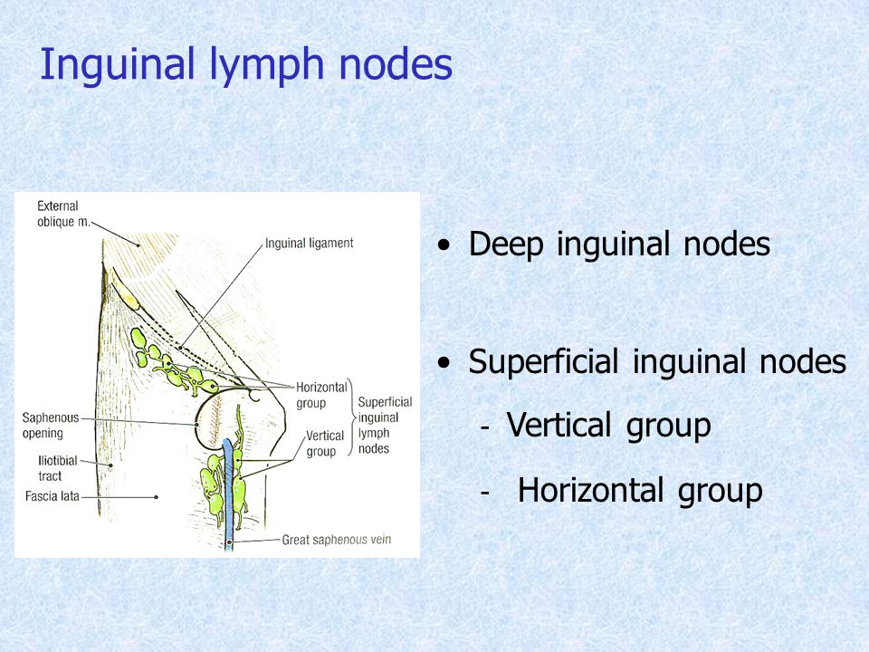 the gallery for gt lymph nodes in groin area female