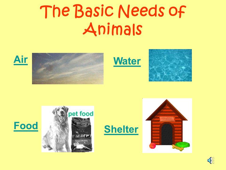 Basic Needs Of Animals Worksheets : Four basic needs of animals bing images