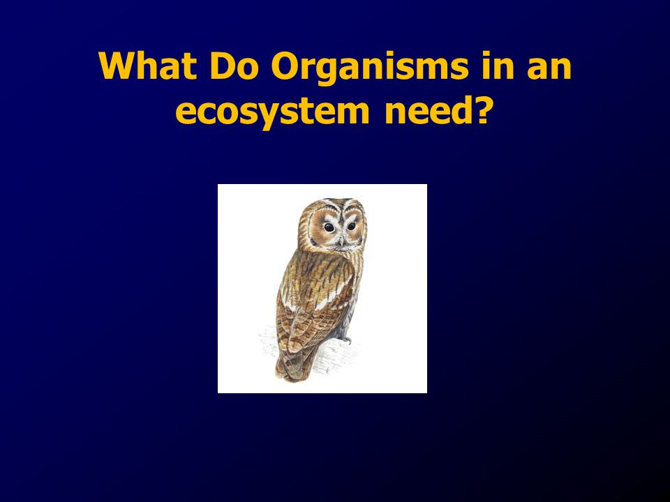What Do Organisms in an ecosystem need
