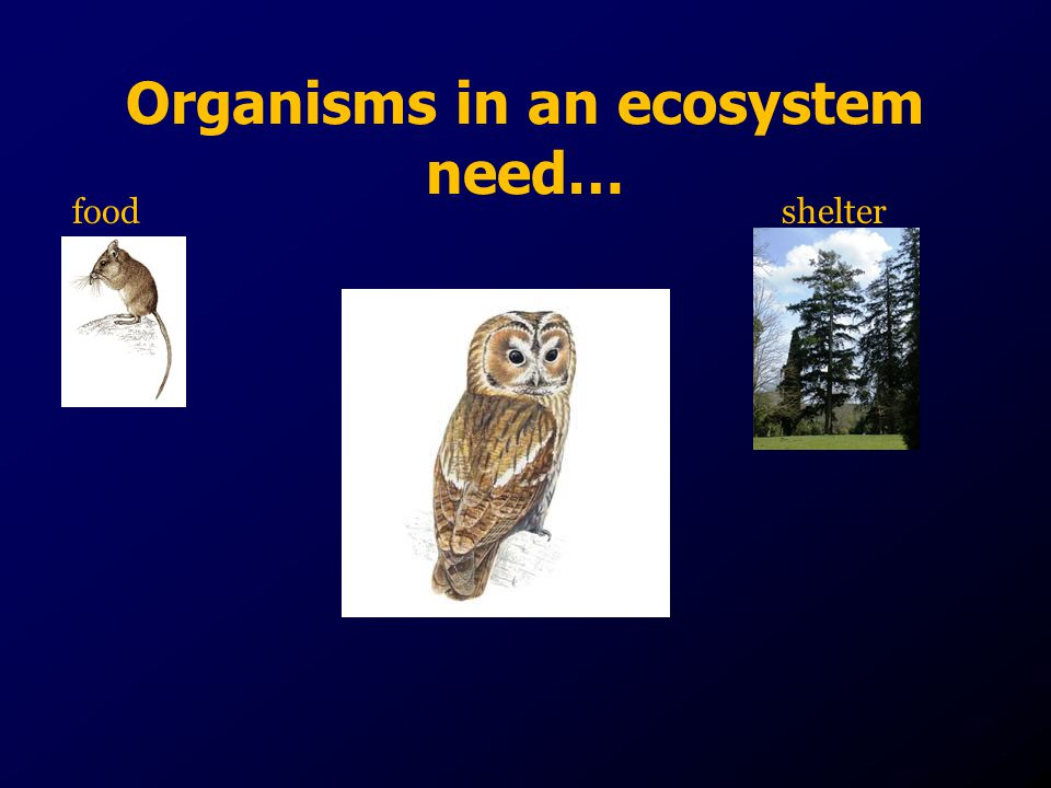 Organisms in an ecosystem need…