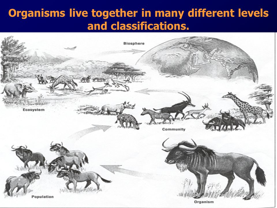 Organisms live together in many different levels and classifications.