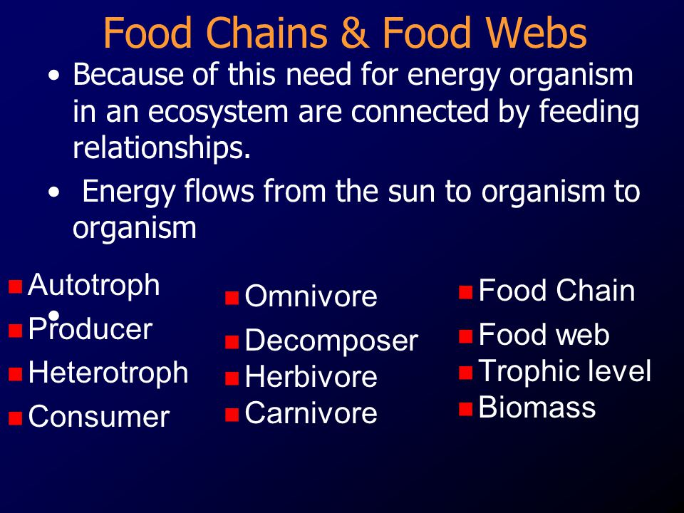 Food Chains & Food Webs Because of this need for energy organism in an ecosystem are connected by feeding relationships.