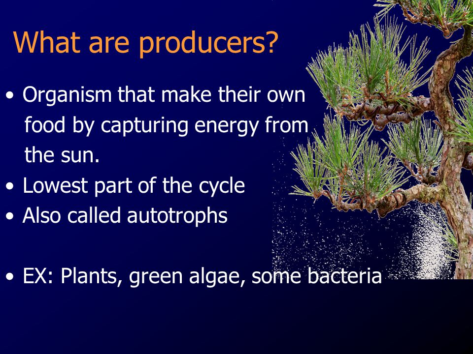 What are producers Organism that make their own