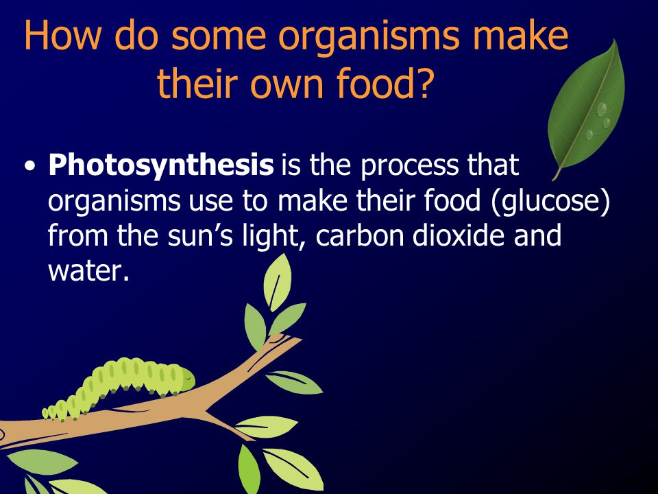 How do some organisms make their own food