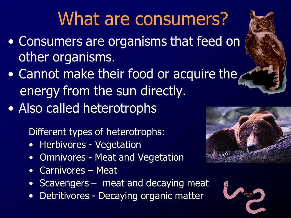 What are consumers Consumers are organisms that feed on other organisms. Cannot make their food or acquire the.
