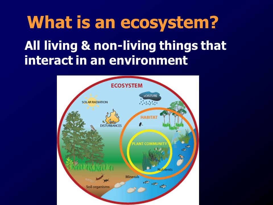 What is an ecosystem All living & non-living things that interact in an environment