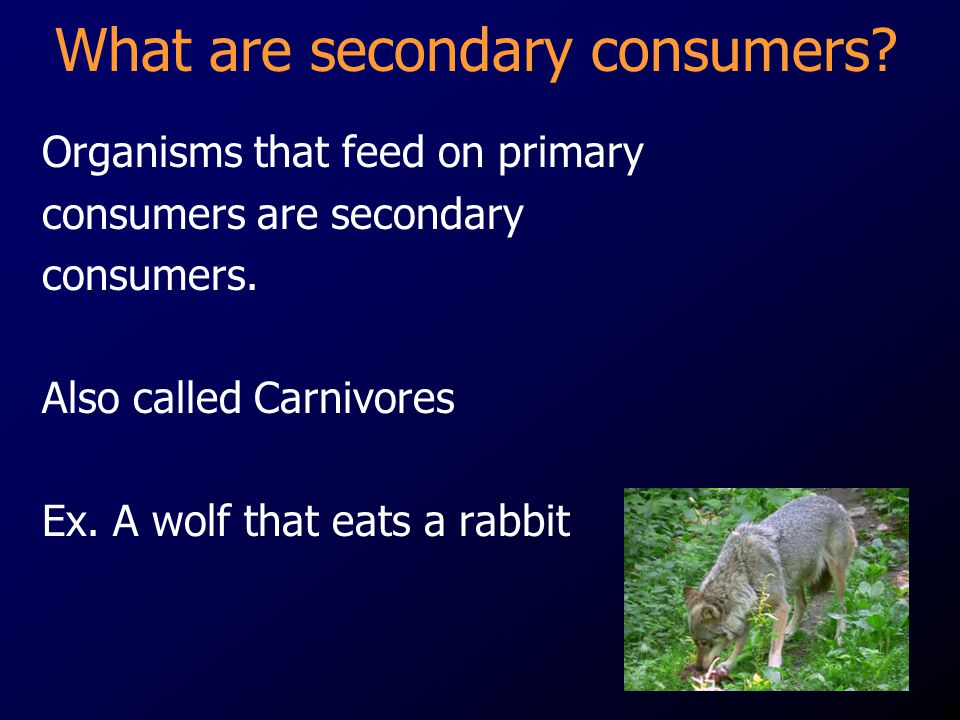 What are secondary consumers
