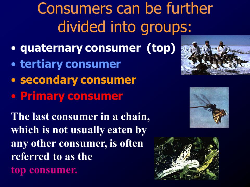 Consumers can be further divided into groups: