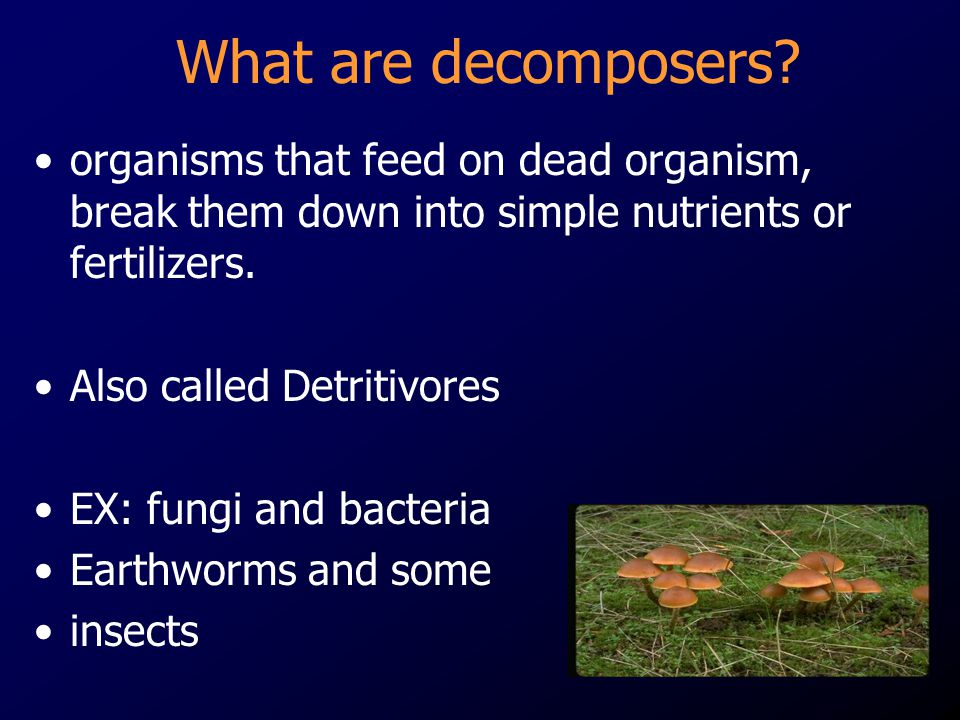What are decomposers organisms that feed on dead organism, break them down into simple nutrients or fertilizers.