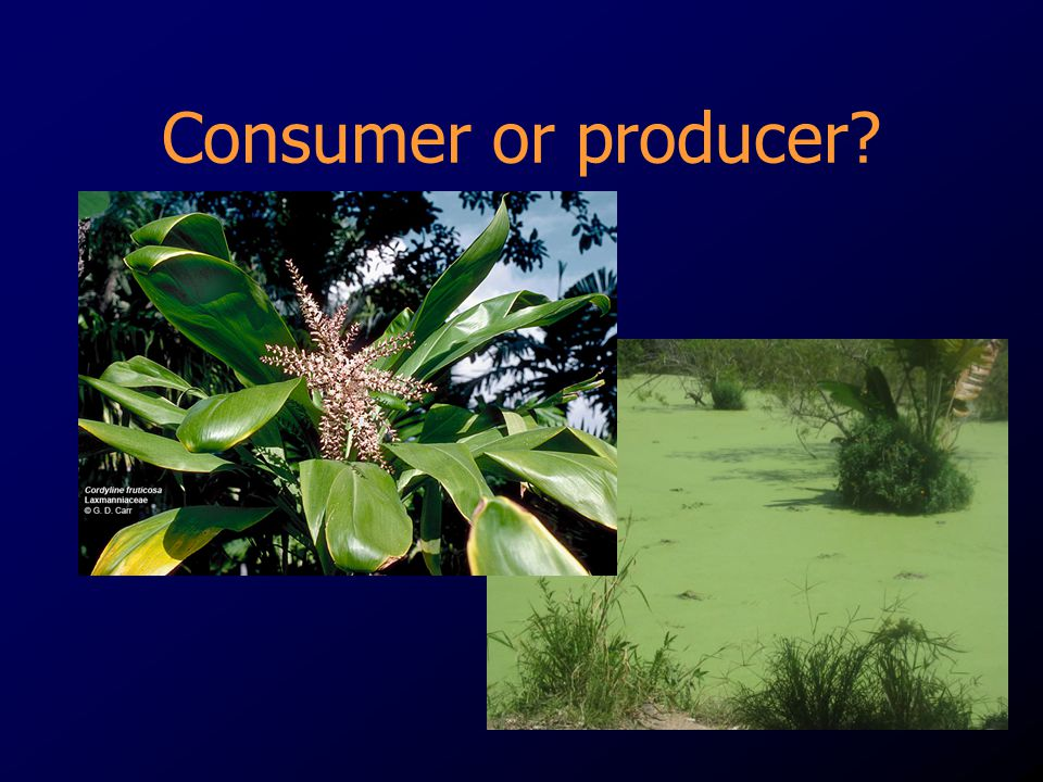 Consumer or producer