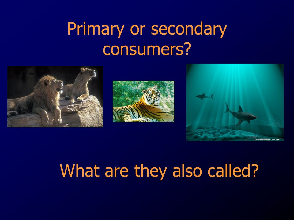 Primary or secondary consumers