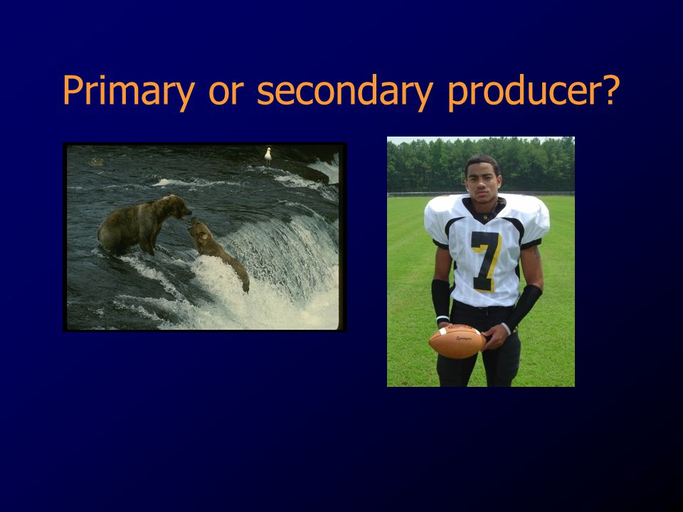 Primary or secondary producer