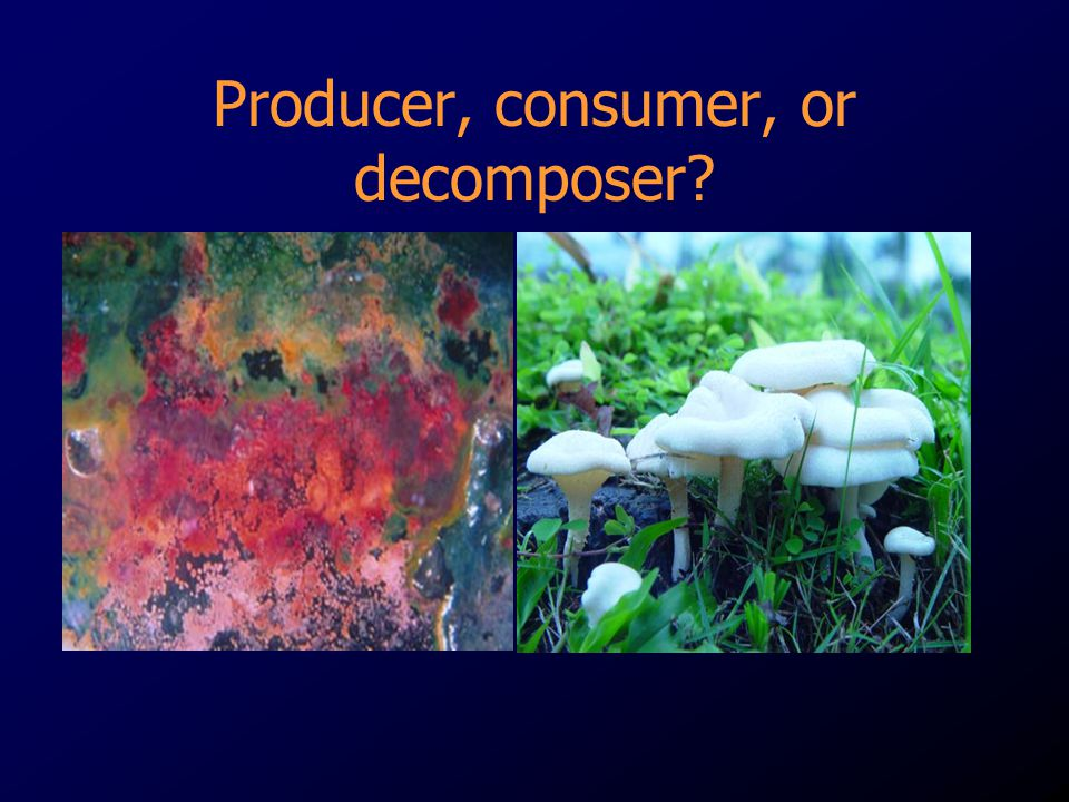 Producer, consumer, or decomposer