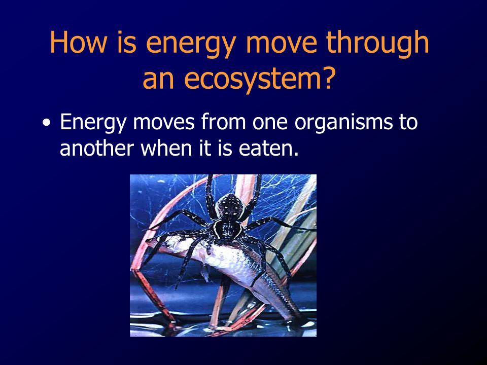 How is energy move through an ecosystem