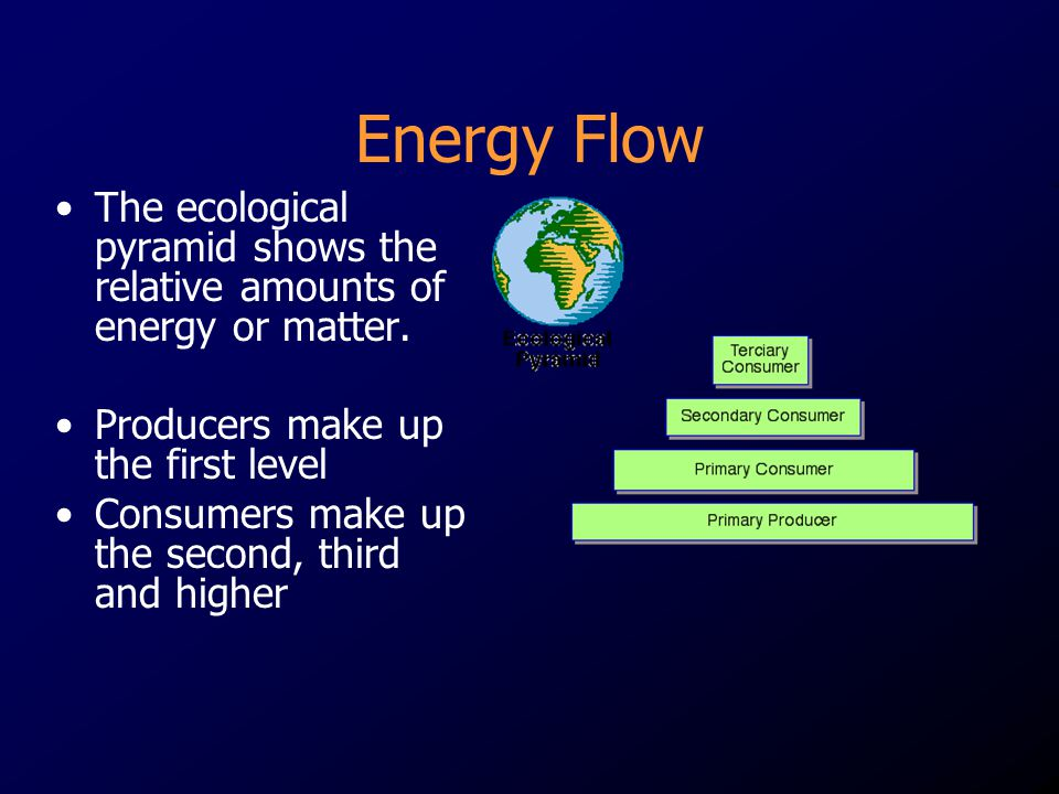 Energy Flow The ecological pyramid shows the relative amounts of energy or matter. Producers make up the first level.
