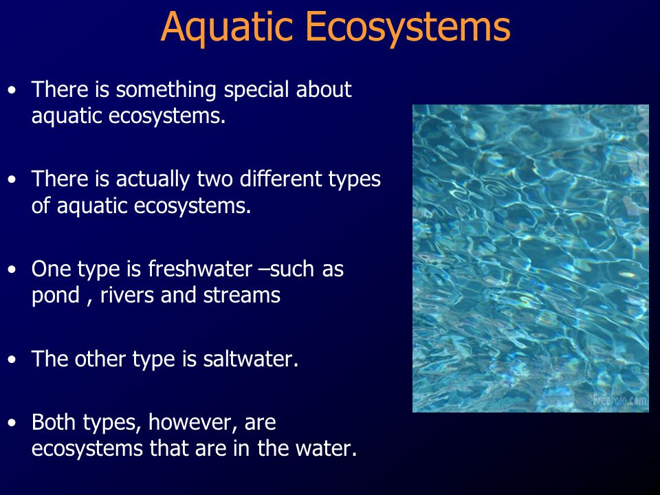 Aquatic Ecosystems There is something special about aquatic ecosystems. There is actually two different types of aquatic ecosystems.