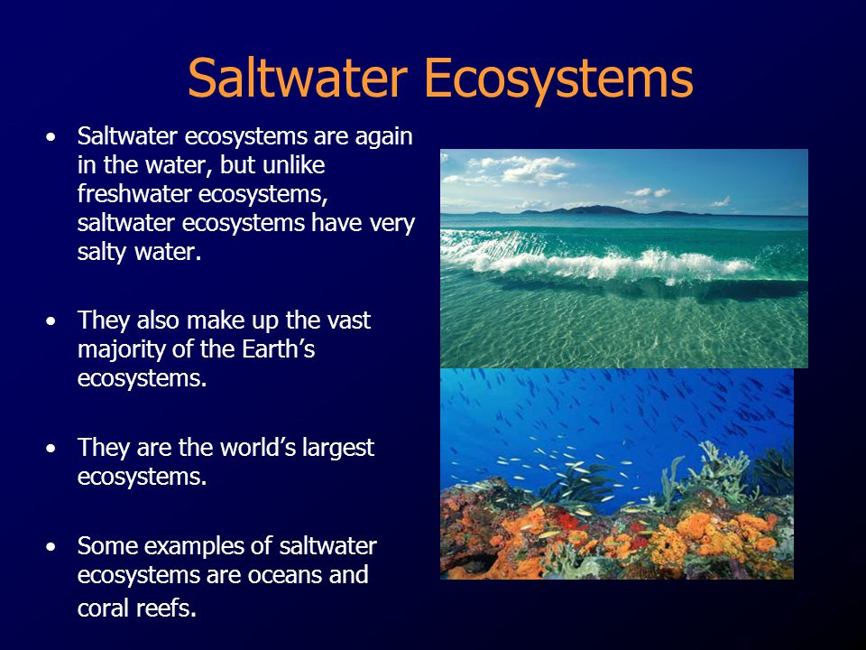 Saltwater Ecosystems Saltwater ecosystems are again in the water, but unlike freshwater ecosystems, saltwater ecosystems have very salty water.