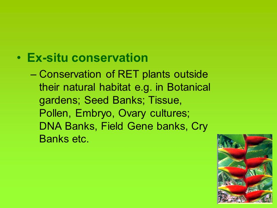 Genetic Diversity in Medicinal & Aromatic Plants & their Conservation in India P. Pushpangadan ...