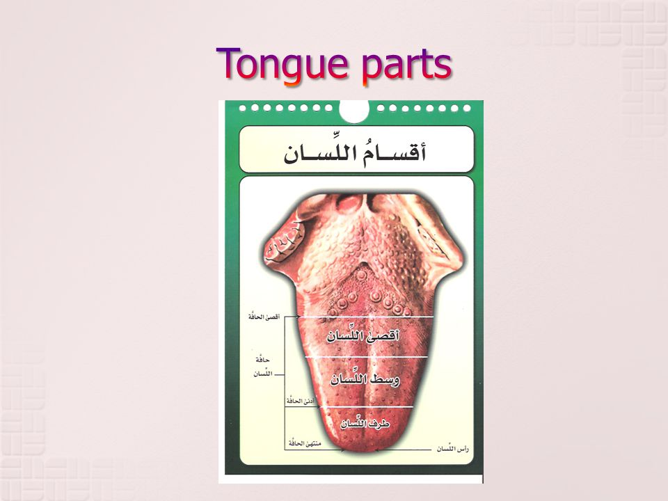 Week 4 MAKHRAJ AL LISSAN (Tongue) Part 2 5 Rajab ppt video ...