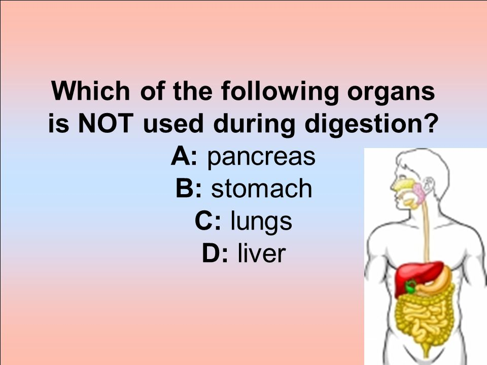 Which of the following organs is NOT used during digestion